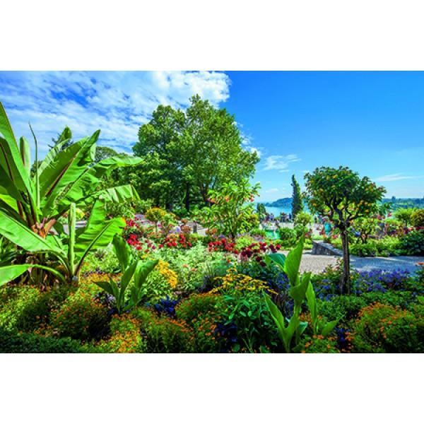 Rosenträume Insel Mainau