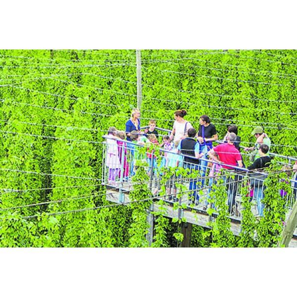 Hopfengut N°20 Bierbraukunst & Neues Schloss Tettnang